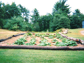 Rhubarb and strawberr garden inspiration for large spaces. | jnkdavis.com